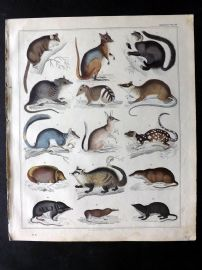 Oken 1843 HCol Print. Mole, Shrew, Mouse, Rdents 29